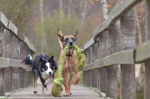 polecana hurtownia akcesoriów dla psów