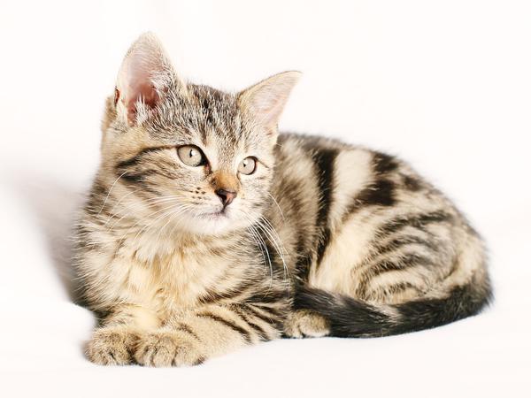 skuteczna ochrona przeciw pchłom dla kota